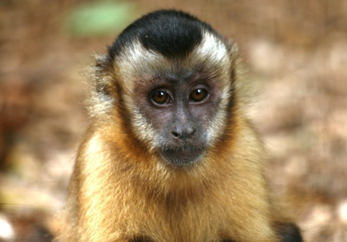 Wild Futures Monkey Sanctuary
